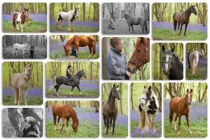 A collage of horses in a bluebell wood.